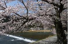 お花見大阪