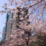 下剋上受験第7回感想|桜井家中学受験の中止のピンチ!