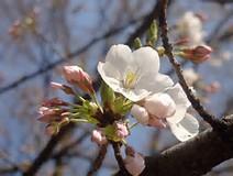 春休みスケジュール