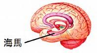 記憶力短期記憶長期記憶復習