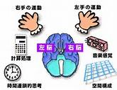 右脳左脳構造働き違いタイプ診断