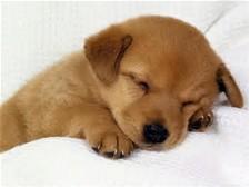 脳科学睡眠勉強