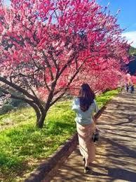 中学受験生の母の本音の日記・馬渕教志望校別特訓
