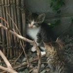 子猫(画像あり)が住み着いた主人の実家|次女が喜んでいます