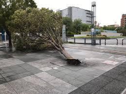台風21号臨時休校小学生