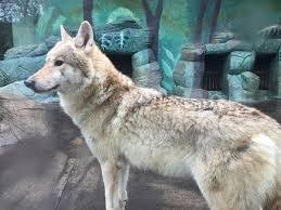 天王寺動物園感想